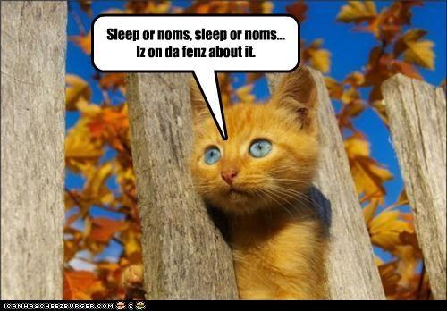 Sleep or noms, sleep or noms... Iz on da fenz about it.
