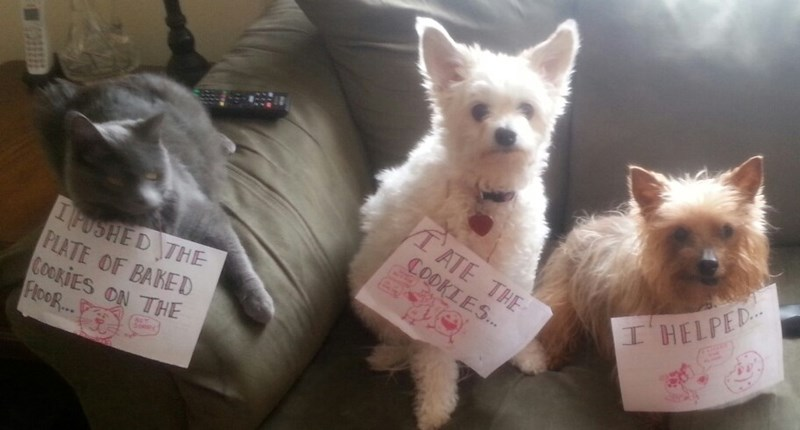 a funny list of dog shaming