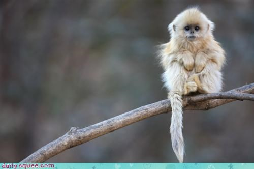 acting like animals cowering ever friendship hug hugging monkey question Sad saddest - 4372961280