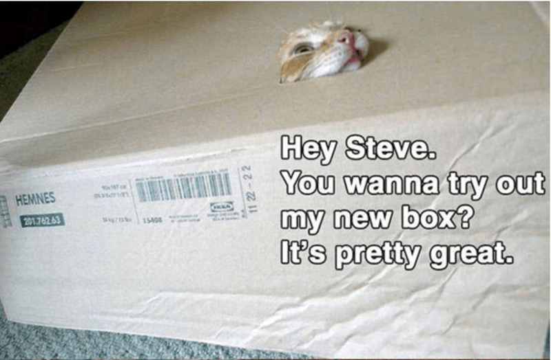 boxes story Cats funny - 4372997