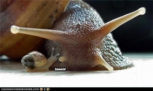 caption captioned kissing love smooch snail snails tiny - 4373252096