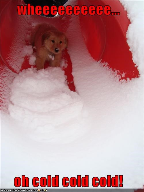 cold do not want excited golden retriever puppy realization shocked slide sliding snow surprised - 4373476352