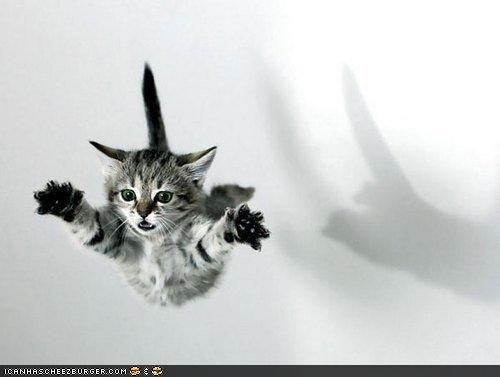 arms out,cyoot kitteh of teh day,jumping,leaping,supercat,superman