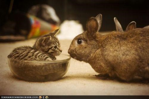 bowl,bunny,bunway,cyoot kitteh of teh day,Interspecies Love,rabbit