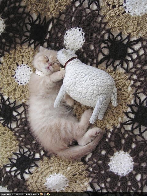 cyoot kitteh of teh day,dreams,nap,sheep,sleeping,stuffed animal,toy