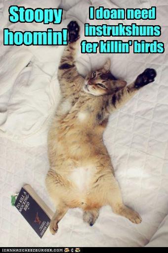 Stoopy hoomin! I doan need instrukshuns fer killin' birds Stoopy hoomin! I doan need instrukshuns fer killin' birds