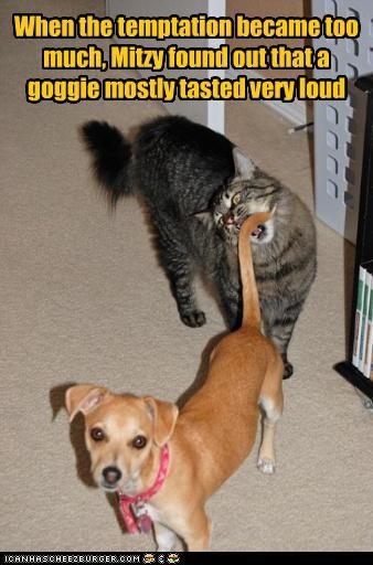 caption captioned cat dogs goggie loud overwhelmed pain taste temptation