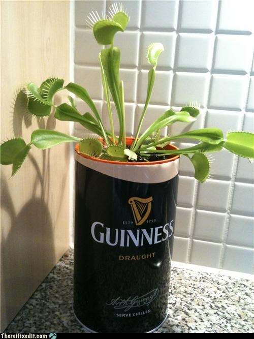 beer,beer can,plants