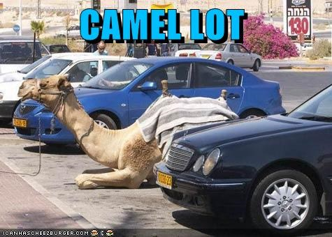 camel,camelot,caption,captioned,contraction,literalism,lot,pun