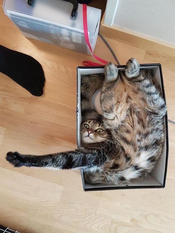 a funny list of cats fitting and sitting in weird places of 2017