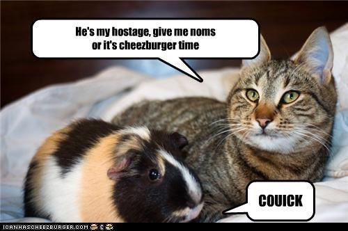 Cheezburger Image 4374554112