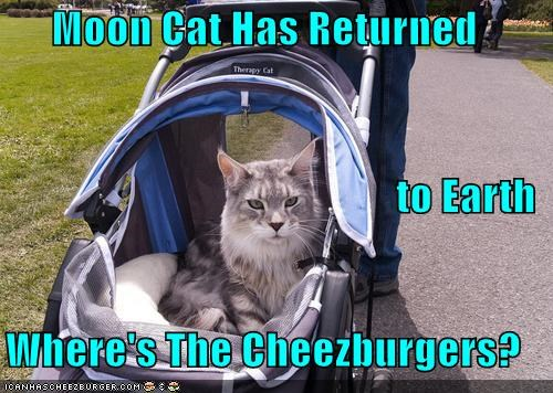 Cheezburger Image 4374702592