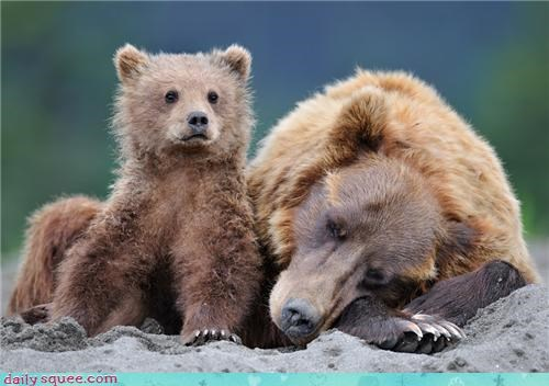 baby,bear,mom,mothers day,sleeping
