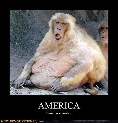 america,ape,baboon,monkey,zoo