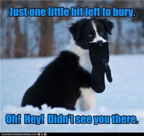 bit border collie bury burying glove left noticing one piece puppy realization snow talking thinking - 4375303424