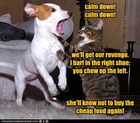 calm down! calm down! we'll get our revenge. i barf in the right shoe; you chew up the left. she'll know not to buy the cheap food again!
