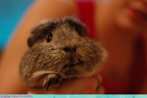 acting like animals baby breathe cant hamster help pleading please squeezed squeezing stuck - 4375828224