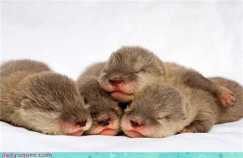 baby cuddle puddle cuddling Hall of Fame otters sleeping squee
