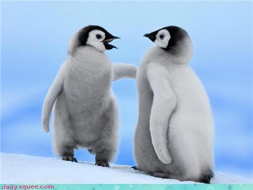 Babies,Fluffy,friends,fuzzy,penguins,snow,squee,white