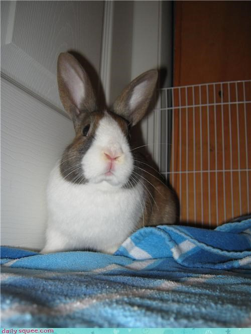 Bunday bunny disappointed pets reader squees