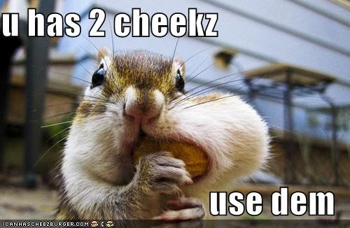 animals cheeks critters nuts squirrel - 4376026368