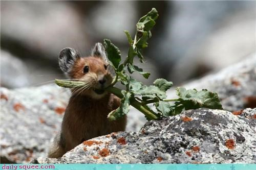 mouse plant rodent - 4376034816