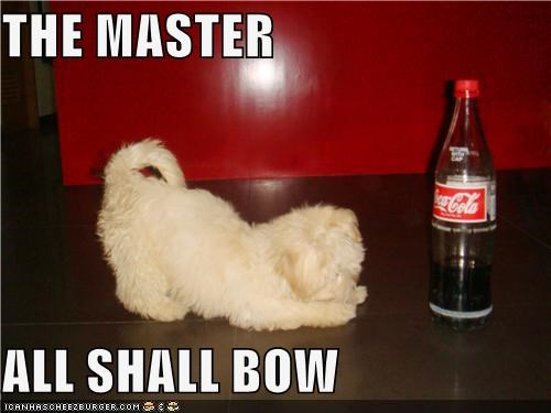 bottle bow coca cola coke Command drink Hall of Fame master puppy whatbreed worship worshipping - 4377020416