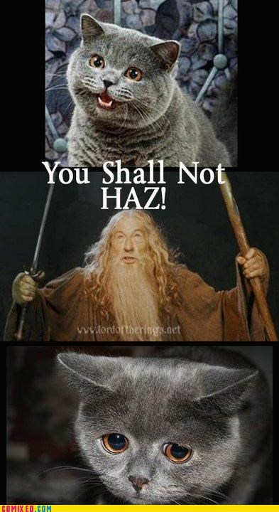 Cats,cheezburger,gandalf,happy cat,Lord of the Rings,puns,Sad,the internets,wizards,you shall not pass