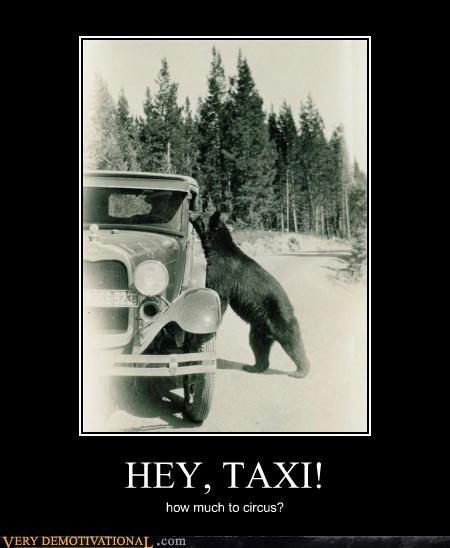 wtf car bear taxi - 4377253632