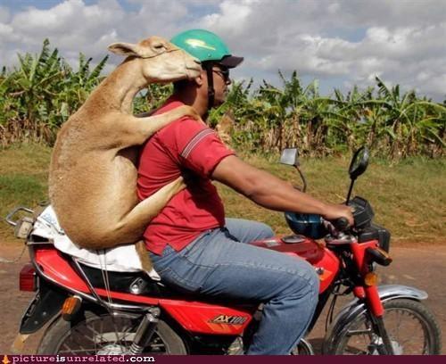 animals cute transportation wtf - 4377304832