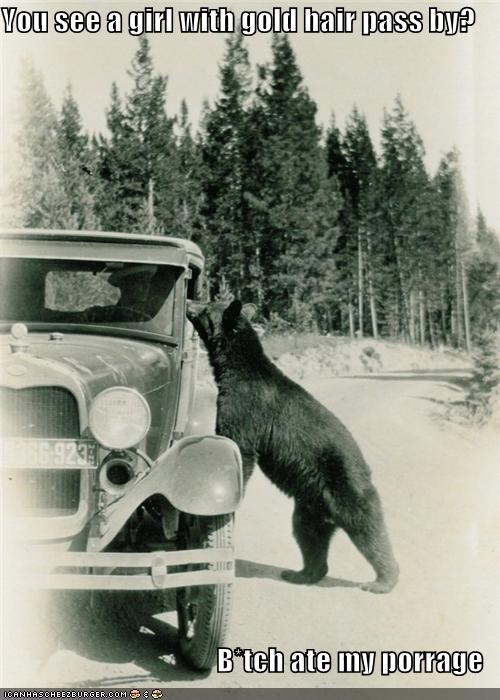 animal bear car funny Photo technology - 4377667328