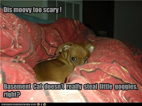 Dis moovy too scary ! Basement Cat doesn't really steal little goggies, right?