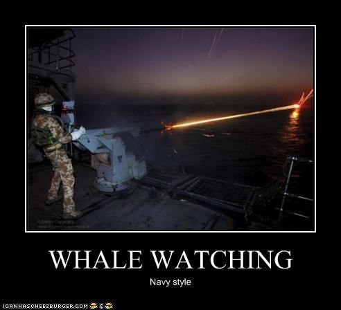 laser military navy whale watching whales - 4377838592