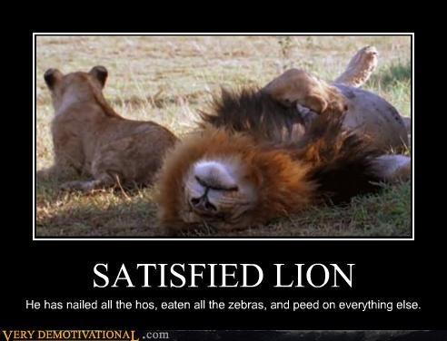 lion pee satisfied zebras - 4378223360
