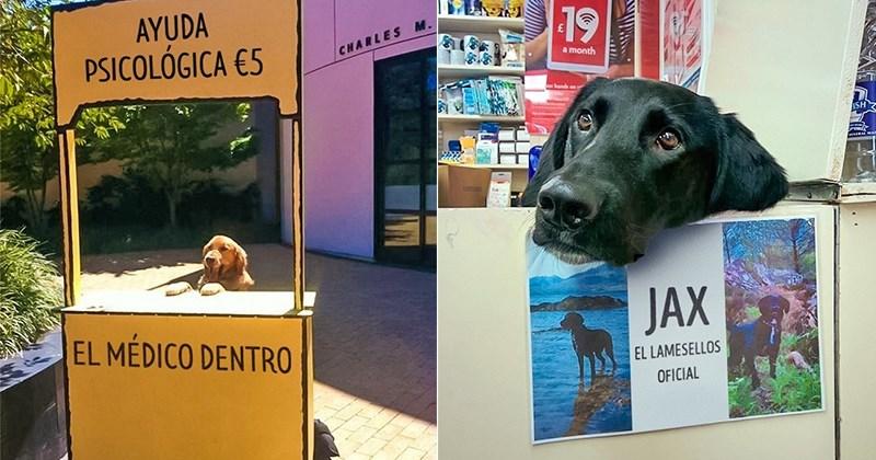 fotos perros perfectos