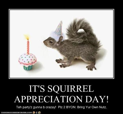 candle caption captioned celebrate cupcake hat holidays Party squirrel squirrel appreciation day squirrels - 4378688256