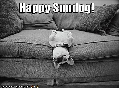 couch french bulldogs happy happy sundog peaceful sleeping Sundog upside down - 4378696192