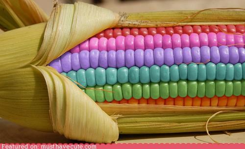 candy,colors,corn,corn on the cob,epicute,pastels