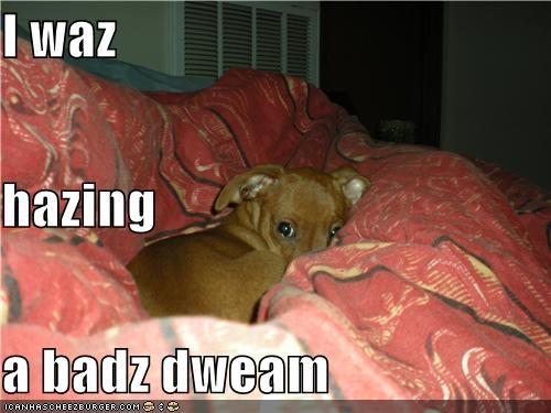 Cheezburger Image 4379409664