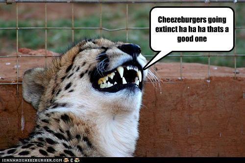 Cheezburger Image 4380566784