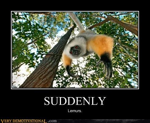 suddenly lemur monkey