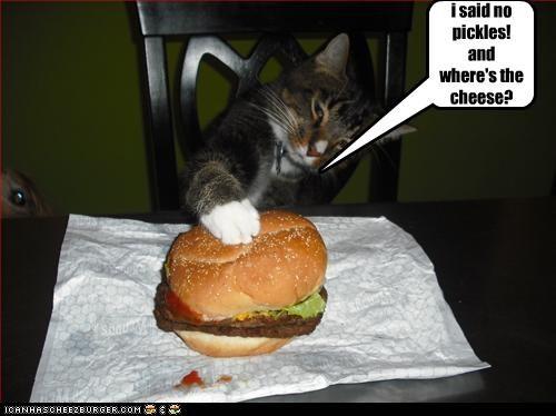 Cheezburger Image 4381022464