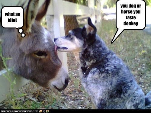 you dog or horse you taste donkey what an idiot