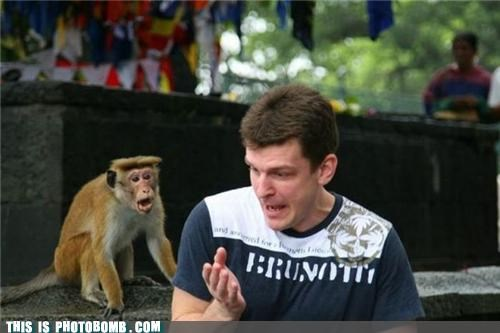 animals,invisible,monkey,photobomb,sad but true