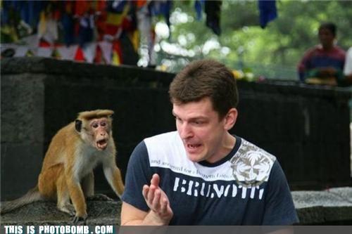animals invisible monkey photobomb sad but true - 4381570048