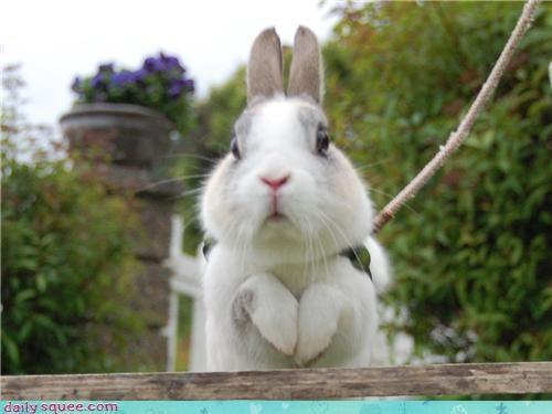 Bunday,bunny,hop,jump,leash