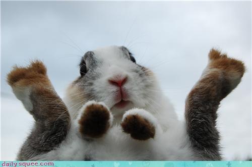 Bunday bunny feet happy bunday silly - 4381689088
