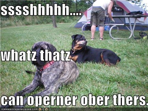Cheezburger Image 4381974272