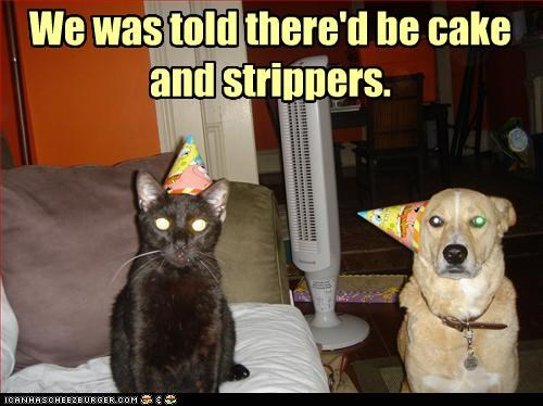 cake,caption,captioned,cat,disappointed,dogs,hats,Party,party hat,promised,strippers,told