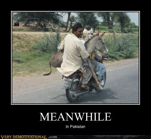 Pakistan donkey Meanwhile - 4382277632
